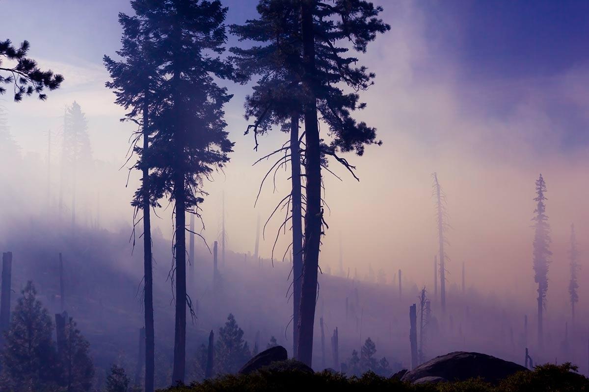 Sobre D 102/2017, de medidas urxentes de axuda para a reparación de danos causados polos incendios